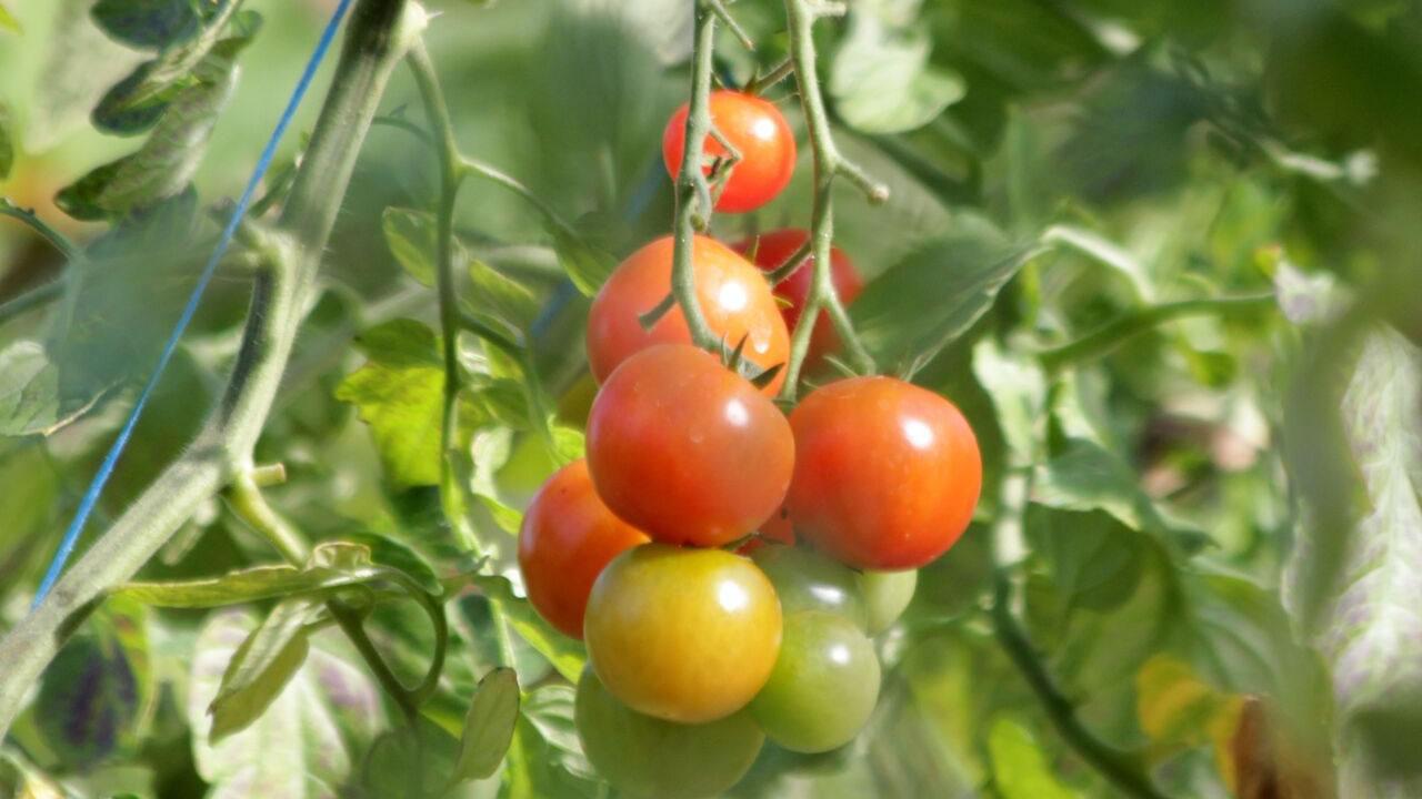 Organic Garden An Tairseach in Wicklow